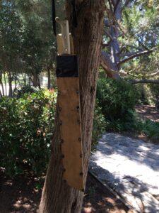 Sheath in tree